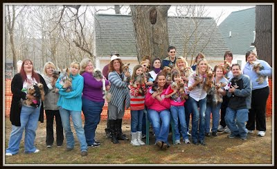 Michigan Yorkie Meetup Club