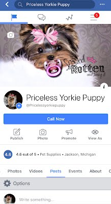 Priceless Yorkie Puppy On Facebook